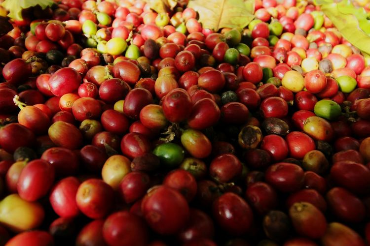 Cona coffee beans. Hawaiian coffee plantation. Fruit Food Food And Drink Market Agriculture Healthy Eating Red Vegetable No People Grape Full Frame Nature Olive Close-up Backgrounds Closing Freshness Space Outdoors Black Olive Coffee Plantations Beans Of Coffee Coffee Red Cultivated