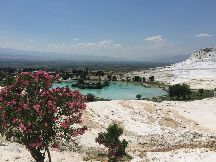 Beauty In Nature Day Flower Pamukkale Travertenleri Sky Tourism Travel Destinations Vacations Water