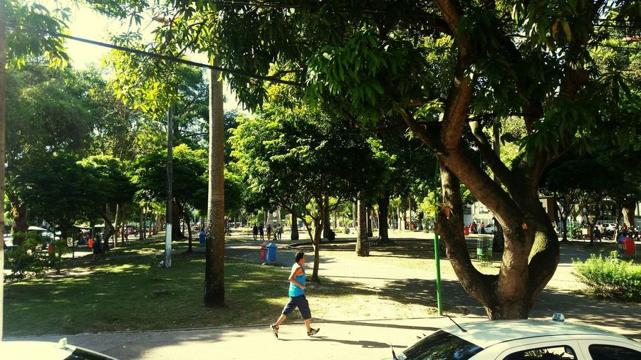 Belém Do Pará Real People One Person Growth Nature One Man Only Travel Destinations Train - Vehicle Brasil ♥ Built Structure Yellow Background Outdoors Full Length Tree People Day Shadow Adult Only Men Adults Only