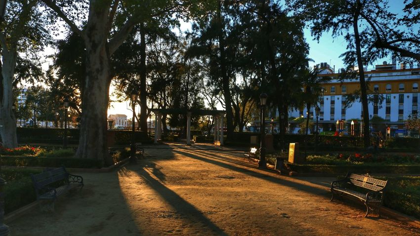 Sevilla Park Sunset Atardecer SPAIN Relaxing Arboles Trees Andalucía