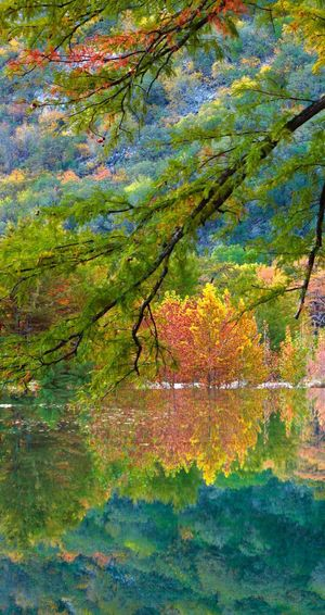 colour's from autumn Multi Colored Tree Nature No People Growth Green Color Full Frame
