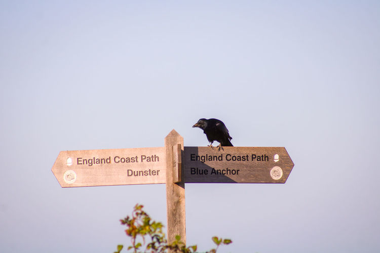 Low angle view of bird perching on sign against clear sky