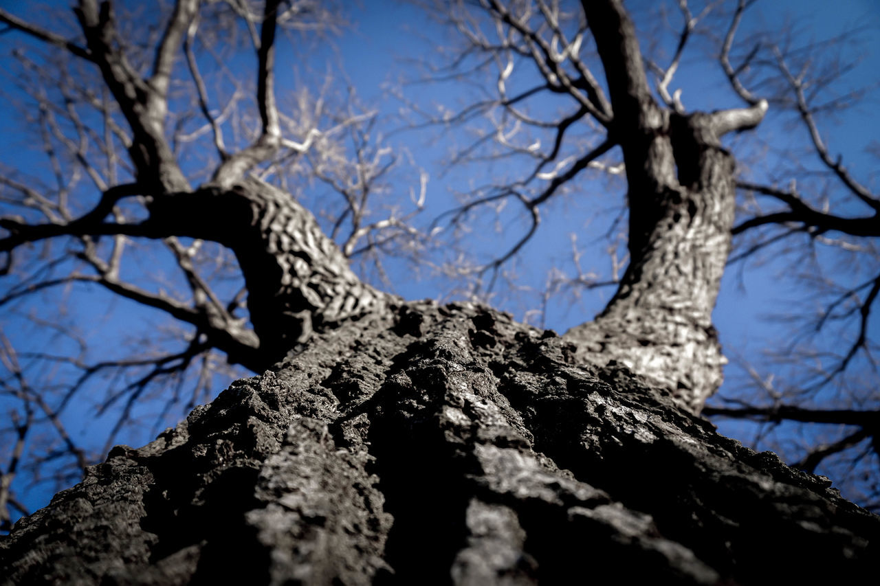 tree, tree trunk, branch, low angle view, bare tree, nature, textured, day, bark, outdoors, no people, dead plant, clear sky, beauty in nature, sky, blue, dead tree, close-up