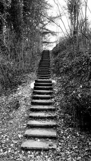 Escalator Nature