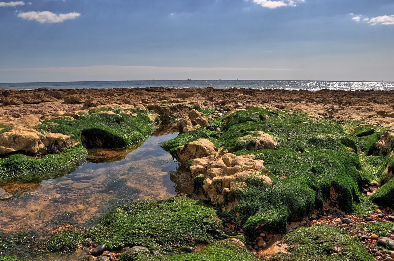 nature, scenics, tranquil scene, beauty in nature, water, tranquility, sky, landscape, day, outdoors, no people, rock - object, green color, horizon over water, sea, growth, grass, plant, tree