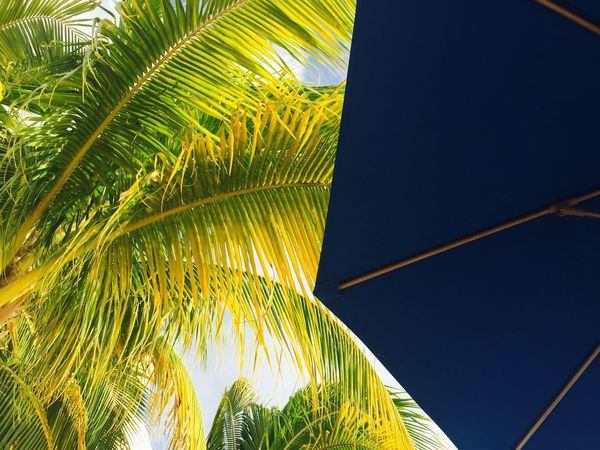 Island Time. Green Blue Sunshine Sunlight Sun Umbrella Sun Umbrella Palm Tree Palm Leaf Tree Leaf Frond Growth Low Angle View Day Palm Frond No People Nature Outdoors Beauty In Nature Close-up Clear Sky Freshness Sky EyeEmNewHere AI Now EyeEm Ready