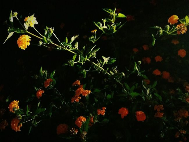 Just Playing Around Experiment Flower Night Photography Night Not Sure...