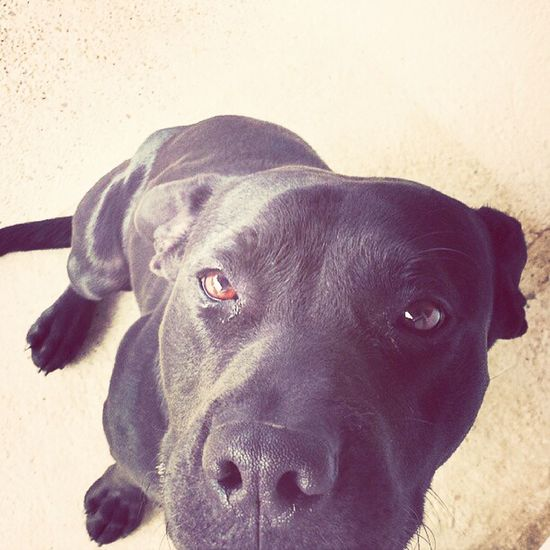 Black horse Dusty :D (my all-time friend) Dog Selfie Fun Cutedog