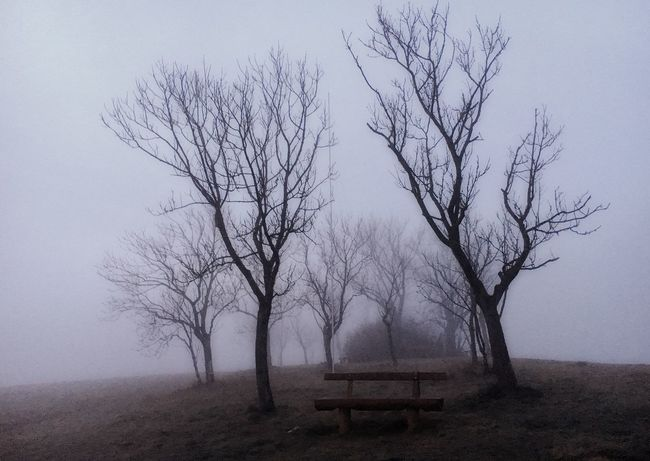Tree Sky No People Branch Nature Beauty In Nature Tranquility Fog Environment Landscape Tranquil Scene Land Field Cold Temperature Outdoors The Great Outdoors - 2018 EyeEm Awards The Great Outdoors - 2018 EyeEm Awards The Still Life Photographer - 2018 EyeEm Awards
