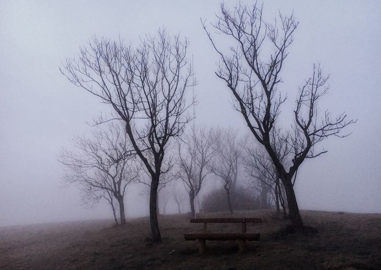 Tree Sky No People Branch Nature Beauty In Nature Tranquility Fog Environment Landscape Tranquil Scene Land Field Cold Temperature Outdoors The Great Outdoors - 2018 EyeEm Awards The Great Outdoors - 2018 EyeEm Awards The Still Life Photographer - 2018 EyeEm Awards Autumn Mood It's About The Journey