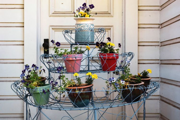 Potted Plant Flower Flowering Plant Architecture Plant Nature No People Flower Pot Built Structure Day Building Exterior Growth Outdoors Building Decoration Yellow Freshness Vulnerability  Fragility Wall - Building Feature Gardening