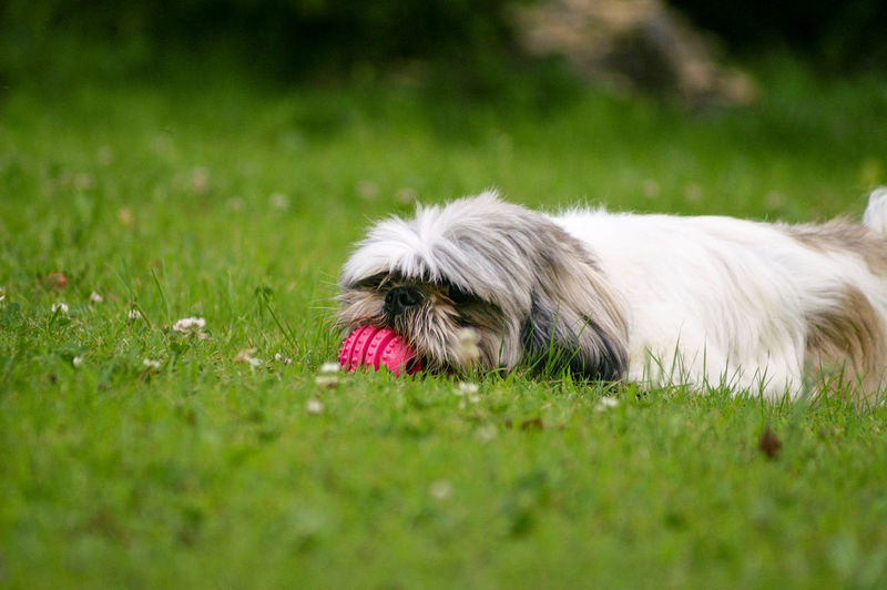 Close-up of a dog on field