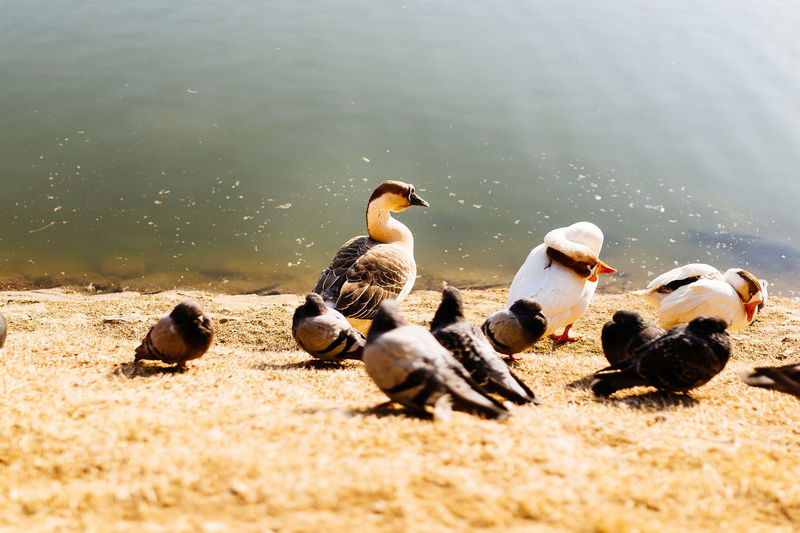 Seoul, Korea Lake View Goose Pigeons EyeEm Nature Lover