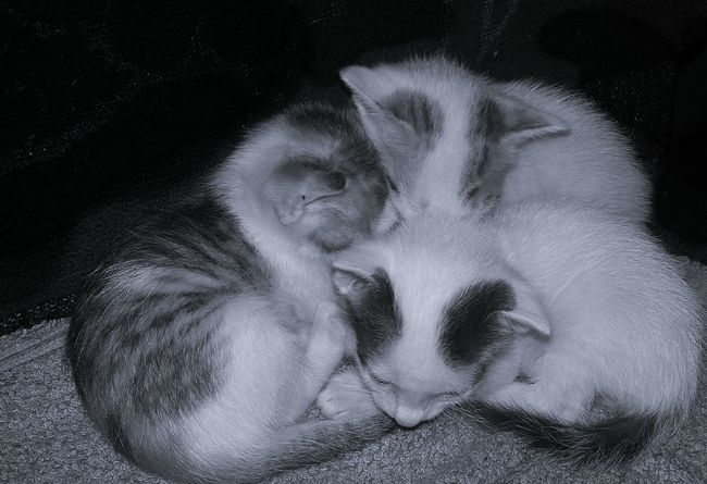 tOgetHer... aLwaYs..wHat.. eveR... bE.. tHe.. suRRoundiNgs... Kitten Close-up Togerherness Sleeping Comfort Black Background Darkness Simple Quiet Love Kerala Light And Dark Expressions No People Indoors  Silence Softness Freshness New Born Cats Pets Animal Themes