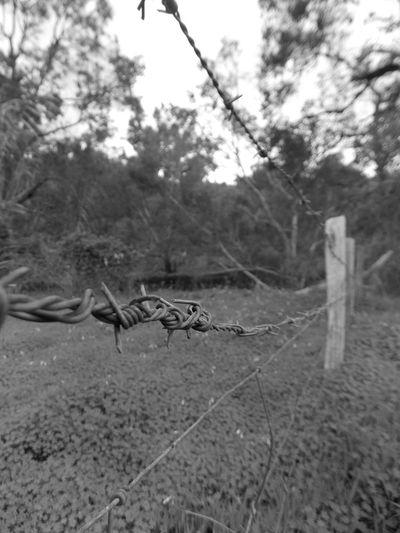 Australia Blackandwhite Country Life Farm Life Fence Wire