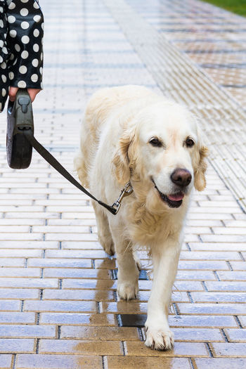 Dog standing on footpath