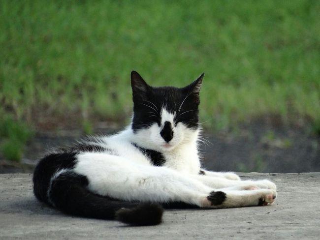 Manabí Calceta ESPAM Gatitolindo Rutadelcacao Cat♡ Cats Of EyeEm