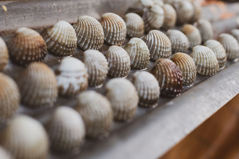 Close-up of shells