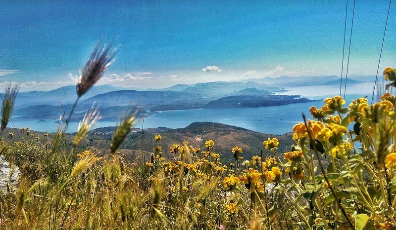 Mountain View Foliage Plant