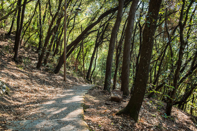 Hiking Path Portofino Natural Regional Park Portofino Promontory Road Trekking Adventure Beauty In Nature Day Deciduous Forest Forest Landscape Liguria Nature No People Outdoors Pathway Scenics Tourism Tranquil Scene Tranquility Tree Tree Trunk