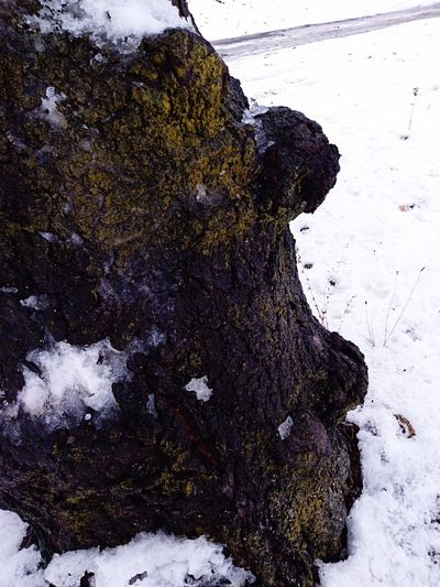 Moss and lichens tree Green Moss On Tree Wet Day Wet Tree Trunk White Snow Covered Trees Winter Time Wintertime Wooden Texture December Cold Days Photo Of The Day Abstract Textured  Cold Temperature Close-up Pixelated Painted Image Fine Art Painting EyeEmNewHere