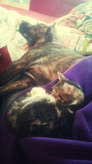 Two friends sleeping... Dog Cat Sleeping