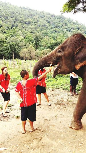 Chaingmai Thailand GoogleSearch Elephant Full Length Real People Outdoors Two People Tree Day Men Friendship Women People Togetherness Adult NatureeleElephant Skin Pattern Elephant Elephant Thailand Elephant Word Book Shop Book Elephant