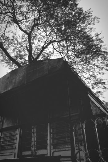 Tree Low Angle View No People Day Outdoors Sky Spooky Spooky Atmosphere Spooky Trees Spooky Places Delhi New Delhi Train Rail Railmuseum Rail Museum Sky And Trees Blackandwhite Black & White Black And White Black And White Photography