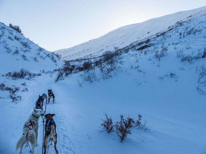 Huskies Wilderness Area Adventure Beauty In Nature Blue Canada Clear Sky Cold Temperature Coldness Day Mountain Mountain Range Mushing Nature Outdoors Sled Dog Snow Snowcapped Mountain Wilderness Wilderness Adventure Wildernessculture Winter Yukon Territory