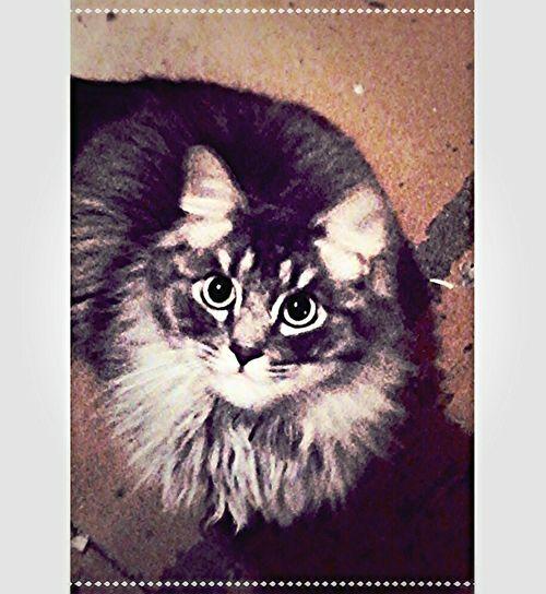 Любимый котик ^•^