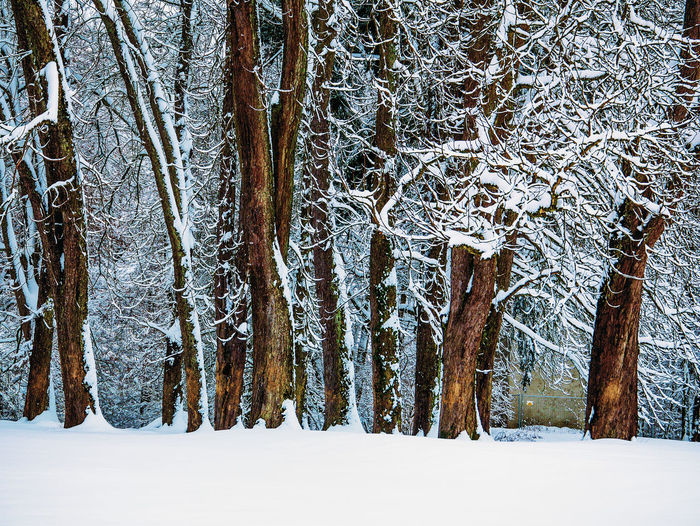 Winterwonderland in Germany Landschaft Wintertree Bare Tree Beauty In Nature Cold Cold Temperature Landscape Nature No People Outdoors Scenics See Snow Tree Winter Winterwald