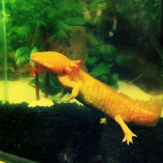 Blaze was like this for 5 whole minutes! Like I said his retarded!! Dopey Blaze Walking Fish FotoRus
