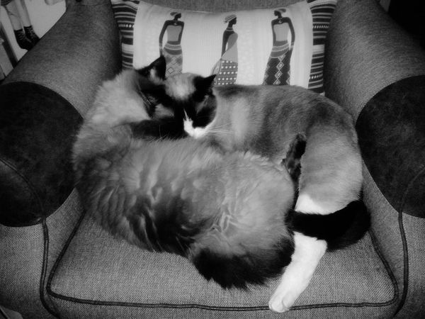 Angel and Mia sisterly love Relaxing Cute Pets Paws