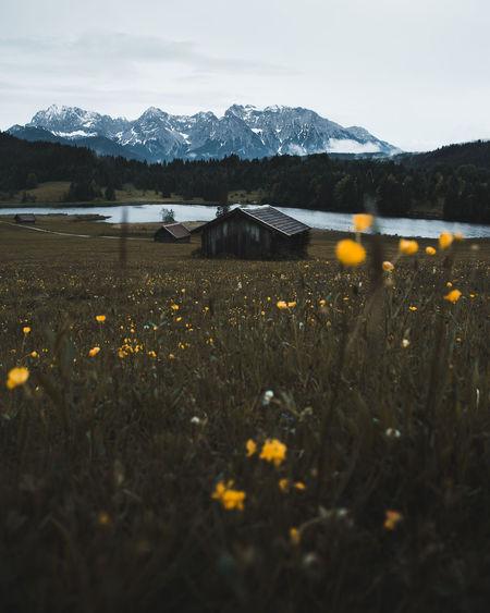 Log cabin on field