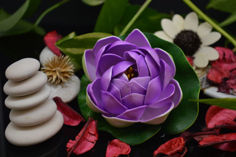 Flower Healthy Eating Wellness Zen Meditation Beauty In Nature Flowering Plant Plant Petal Close-up Flower Head Nature No People Leaf Plant Part Spa