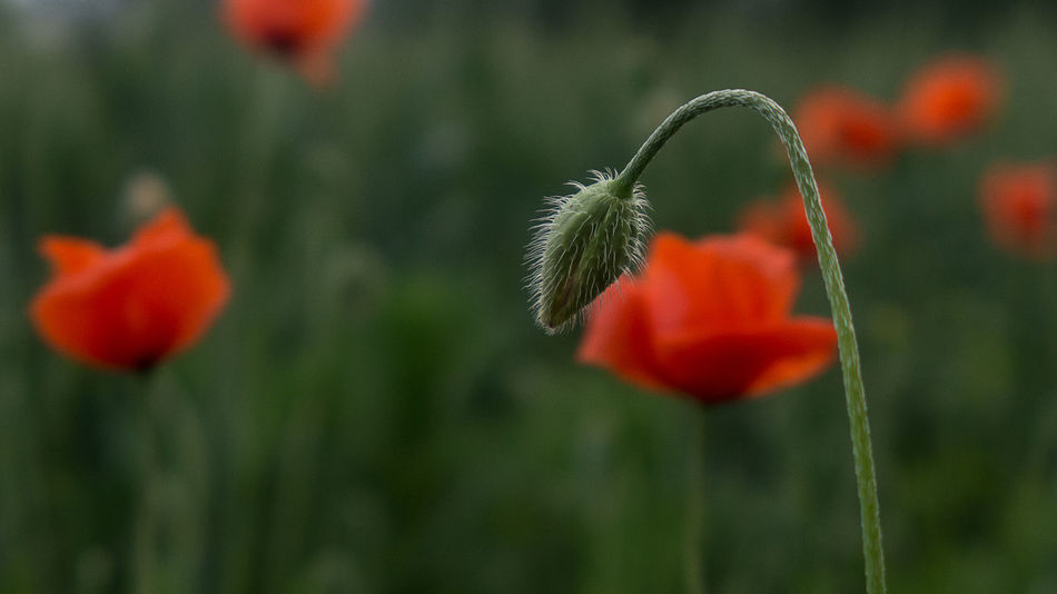 The Great Outdoors Nature The Great Outdoors - 2016 EyeEm Awards The Great Beauty Poppy Flowers Poppyflower Poppy In A Field Poppy Love Papaver Spring 2016 Springflowers The Beginning Of Summer The Street Photographer - 2017 EyeEm Awards The Great Outdoors - 2017 EyeEm Awards Neon Life EyeEm Selects Breathing Space Investing In Quality Of Life The Week On EyeEm EyeEmNewHere Your Ticket To Europe Mix Yourself A Good Time Discover Berlin Been There. Done That. Lost In The Landscape Second Acts Be. Ready. EyeEm Ready   AI Now Go Higher Visual Creativity Summer Exploratorium #FREIHEITBERLIN