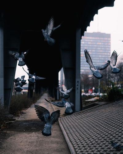 Flock of birds in a city