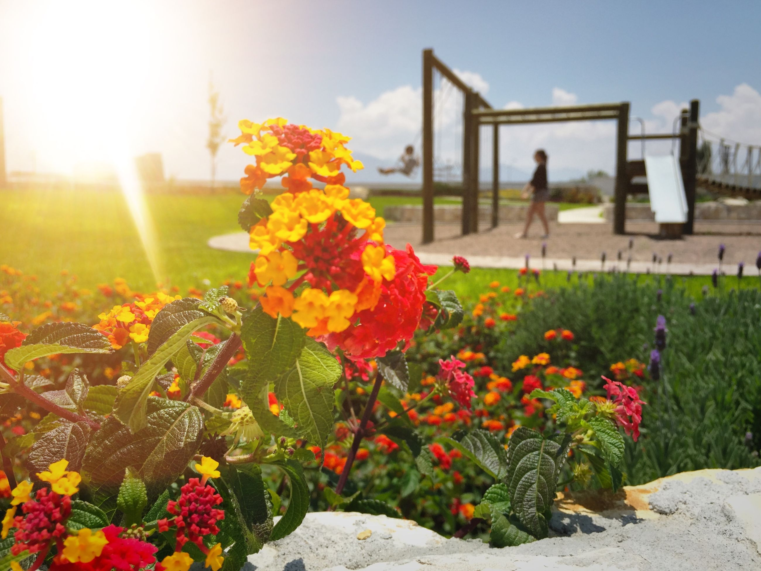 flower, freshness, fragility, petal, plant, growth, blooming, beauty in nature, flower head, sunlight, nature, sky, sunbeam, in bloom, field, focus on foreground, built structure, yellow, sun, lens flare