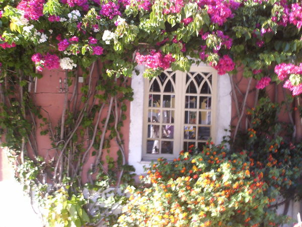 Architecture Beauty In Nature Building Exterior Built Structure Day Explosion Of Colors Flower Flower Head Fragility Freshness Growth House Leaf Mediterranean Beauty Nature No People Outdoors Pink Color Plant Romantic Flowers Romantic Window Smell Of Love. The Great Outdoors - 2017 EyeEm Awards Window Window Box