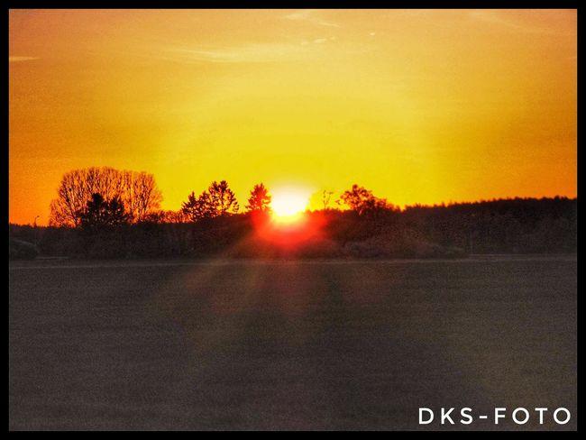 Sweden The True Story Tree Sunset Spraying Sky