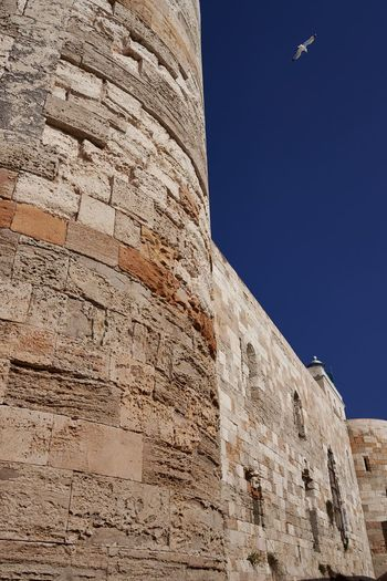 Castello Maniace, Syracuse, Sicily Seagull Bird Blue Sky Clear Sky Tower History Fortification Fortified Wall Architecture Italy No People Syracuse  Siracusa Castello Maniace Sicily Historical Monuments Historical Building Historic Wall Fortress Fort Built Structure Outdoors