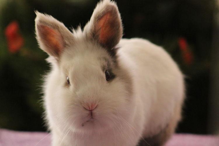 Portrait of rabbit on table