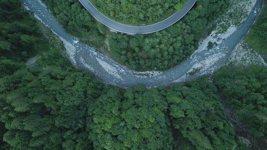 High angle view of moss on land