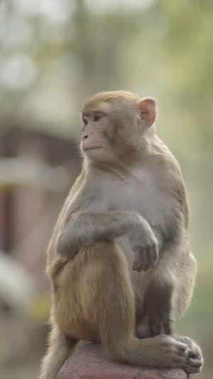 Monkey Monkeys
