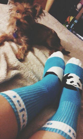 ENJOI SkateboardingClothing Socks