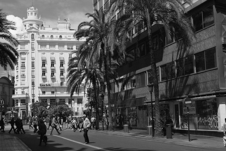 I like very much that white building at the end of the street; it looks like a bride. all dressed in white. Architecture Black And White Building Building Exterior City City Center City Life City Street Crossing The Street Palm Trees Palms People Walking At A Distance Road Street Street Photography The Way Forward Urban Life Valencia, Spain Monochrome Photography Embrace Urban Life