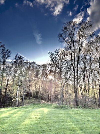 Tree Sport Sky