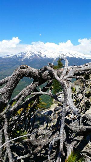 Mount Shasta Black Butte Trail