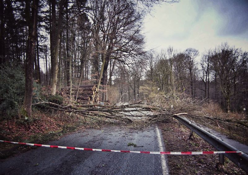 """I'm gonna hit the ground running"" (Friederike) - MAinLoveWithLife and Tree Hitting Road Road Block Road Blocked Nature Outdoors Nature_collection Nature Photography Nature On Your Doorstep Naturelovers Beauty In Nature Beauty Of Decay Storm Storm Damage Storm Collection Hurricane Hurricane Damage Death Decay Life And Death This Is LIFE This Is Not The End - 01.02.2018 - #Hermannsdenkmal #Detmold"