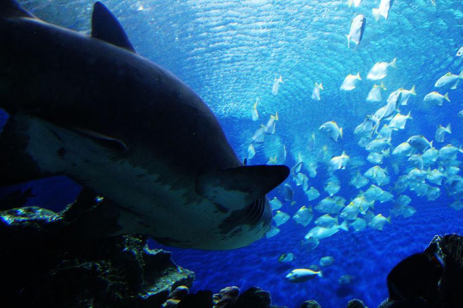 Location: Aquaria KLCC Underwater UnderSea Sea Life Blue Fish Sea No People Nature Swimming Water Day Mammal Daddy Shark doo doo Aquaria Klcc EyeEmNewHere